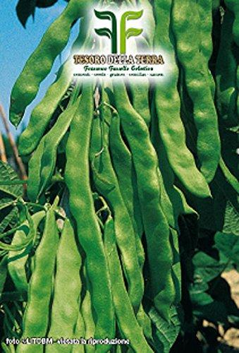 180 aprox – Samen Grüne Kletterbohne Mangiatutto Pardola – Phaseolus Vulgaris In Originalverpackung Made in Italy – Grüne Kletterbohnen