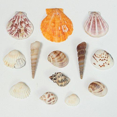GOZAR Strand Natur Aquarium Fisch Tank Dekoration Seashells Handwerk Zubehör