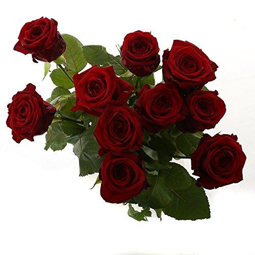 Choice of Green - 1 bouquet de rose rouge Naomi Small - 10 tiges - Hauteur ? 60 cm - Qualité