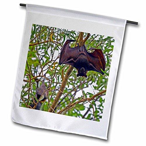 3dRose FL 72304_ 1Australien, No. Territorium, Kakadu NP, schwarz Flying fox-au01bfr0064-bernard Friel Garten Flagge, 12von 18
