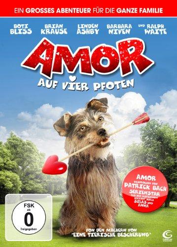 Bild von Amor auf vier Pfoten