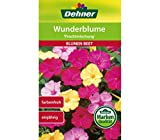 "Dehner Blumen-Saatgut, Wunderblume ""Prachtmischung"", 5er Pack (5 x 3 g)"