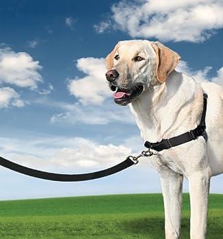 PetSafe - Harnais pour Grand Chien Easy Walk (L), Résistant, Facile à Utiliser, Anti-Traction avec 4 points de Réglage pour un Confort Maximal - Noir