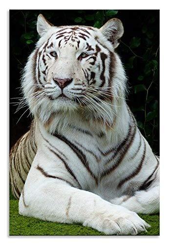 Thousand Face Weiß Tiger Wall Art Animal Kingdom Cat Hochformat auf Leinwand Bild Home Decor Wohnzimmer Badezimmer Art Schlafzimmer Küche Bild Single Panel, 16