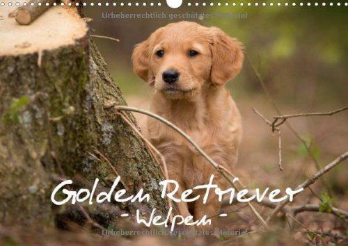 Golden Retriever Welpen (Wandkalender 2014 DIN A3 quer): Monatskalender, 14 Seiten mit Fotos von niedlichen Welpen (Monatskalender, 14 Seiten)