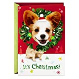 Hallmark Musik-Weihnachtskarte (Dogs, We Wish You a Merry Christmas)
