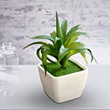 #7: TiedRibbons® Artficial fruit plants | artificial plant for home decoration | miniature plants for home decor| diwali items for decoration