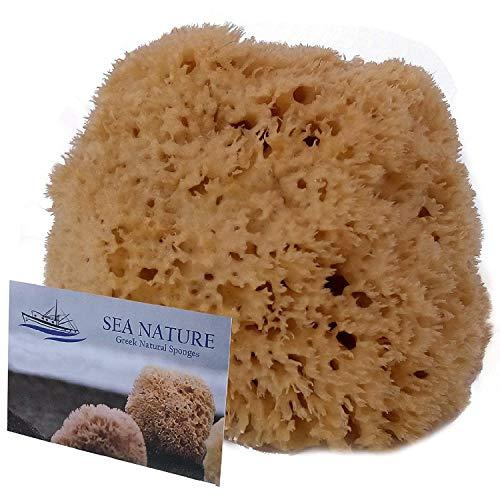 Sea nature, spugna di mare naturale grado 5-6, a nido d'ape, per la pulizia del corpo e viso, ideale per il bagnetto da bambino,resistente e durevole