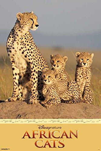 empireposter Disney Nature-African Cats-Tier-Poster Raubkatzen Leopard-Grösse 61x91,5 cm, Papier, bunt, 91.5 x 61 x 0.14 cm