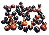 Indigo Rose 10 Samen -Die etwas andere Tomatensorte mit violetter Farbe- ***Sehr Gesund***