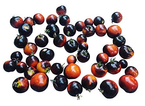 iDealhere 20pcs Graines Rares Noir Tomate Cerise Légumes Fruit Noir Cherry