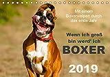Wenn ich groß bin werd' ich Boxer (Tischkalender 2019 DIN A5 quer): Mit einem Boxerwelpen durch das erste Jahr - Monatskalender 2015 (Monatskalender, 14 Seiten ) (CALVENDO Tiere)