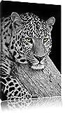 Dark ruhender Leopard schwarz/weiß Format: 80x60auf Leinwand, XXL riesige Bilder fertig gerahmt mit Keilrahmen, Kunstdruck auf Wandbild mit Rahmen, günstiger als Gemälde oder Ölbild, kein Poster oder Plakat