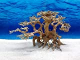 Bonsai Baum XL Wurzel Holz Aquarium Deko Aquascaping Wurzel original Foto Nr.663