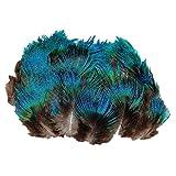 ERGEOB Pfauenfedern blaufedern DIY Basteln Federn 6-8 cm (2-3 Zoll) Länge