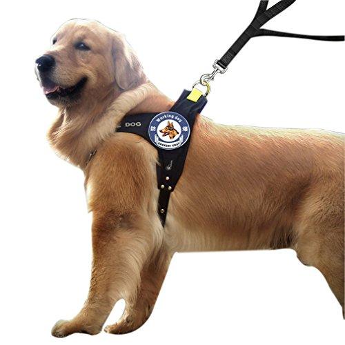 la-vogue-laisse-pour-chien-de-mener-promener-son-chien-harnais-de-fixation-pour-les-grands-chiens-qu