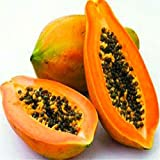 Shopmeeko 50 Teile/beutel Papaya pflanzen Seltene Jardin Heirloom Organisches Gemüse obst pflanzen Bonsai Baum Pflanzen Für Hausgarten Mehrjährige Sement: Violett