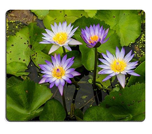 Liili Mauspad Naturkautschuk Mousepads Set Lila Lotus Grow Wunderschön auf Ihr Wasser Garten in Thailand 29222599