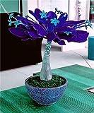 Tipo di prodotto: bonsai, stile: annuale, dimensioni: mini, grande, piccolo, medio, numero di modello: ornamentale bonsai, vaso di fiori: esclusa, coltivare difficoltà grado: molto facile, tipo: woody piante, clima: temperato, periodo full-f...