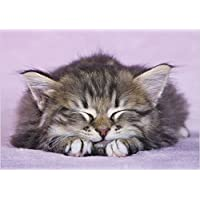 Photographic Greeting Card (ABA1973) - Birthday - Sleeping Kitten - Pink Background - Paw Prints Range