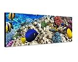 Panoramabild auf Leinwand und Keilrahmen 120x40cm Unterwasser Riff Fische Korallen