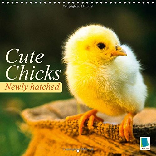 Newly hatched: Cute chicks 2015: Baby chicks from an egg (Calvendo Animals)