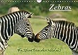 Zebras - Faszination  der Wildnis (Wandkalender 2016 DIN A4 quer): Zebras: Schöne Momentaufnahmen der faszinierenden gestreiften Pferde in freier ... (Monatskalender, 14 Seiten ) (CALVENDO Tiere)