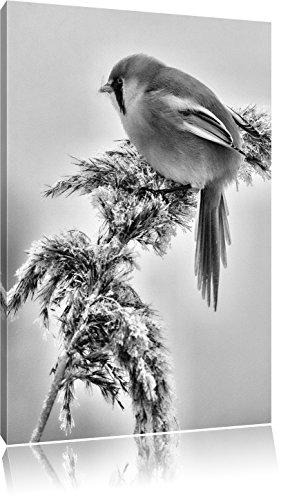 Pixxprint Monocrome, Kleiner Vogel auf Weizen im Winter, Format: 100x70 auf Leinwand, XXL riesige Bilder fertig gerahmt mit Keilrahmen, Kunstdruck auf Wandbild mit Rahmen.