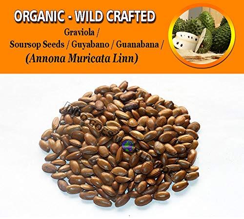 2 Lb / 908 gr: Soursop Seeds Guyano Guanana Graviola Annona Muricata Organic Crafted by Farmerly