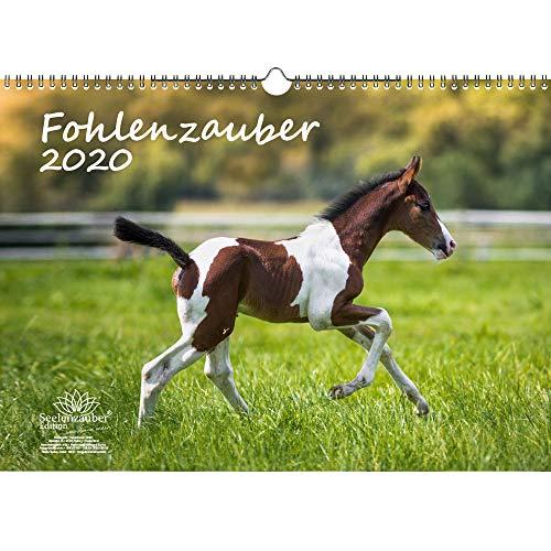 Fohlenzauber DIN A3 Kalender 2020 Pferde und Fohlen Geschenk-Set: Zusätzlich 1 Gruß- und 1 Weihnachtskarte - Seelenzauber