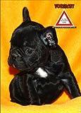 INDIGOS UG - Türschild FunSchild - SE501 DIN A5 ACHTUNG Hund Franz. Bulldogge - für Käfig, Zwinger, Haustier, Tür, Tier, Aquarium - aus hochwertigem Alu-Dibond beschriftet sehr stabil
