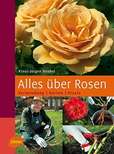 floristikvergleich.de Alles über Rosen: Verwendung – Sorten – Praxis