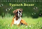 Typisch Boxer (Tischkalender 2019 DIN A5 quer): Mit lustigen Boxern durch das Jahr (Monatskalender, 14 Seiten ) (CALVENDO Tiere)