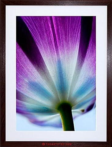 PHOTO PURPLE TULIP FLOWERS BLOOM FRAMED PRINT F12X6192