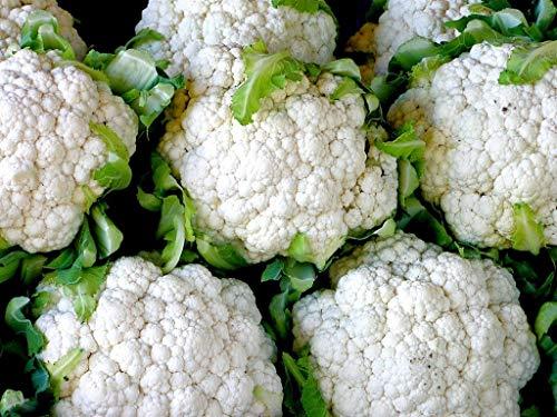 PlenTree 100 boules de neige semences améliorées Chou-fleur