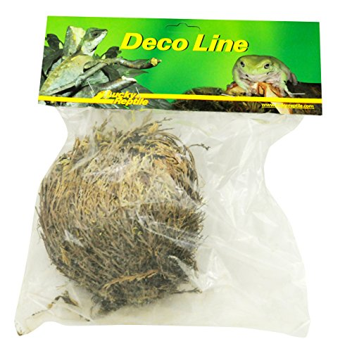 lucky-reptile-dl-rj-rose-of-jericho-live-plant