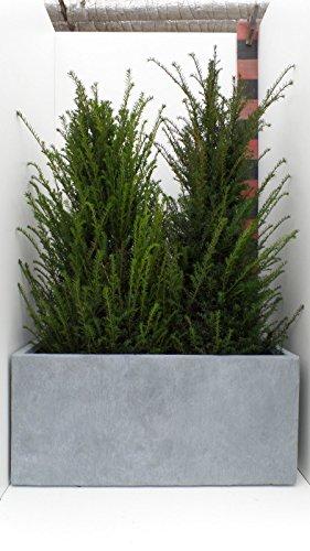 '97 cm de largeur : Jardinière rectangulaire bac à fleurs Cache-pot Eco Composite \\