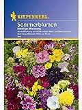 niedrige Sommerblumen-Mischung MAXI-10er Bundle