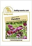 Bobby-Seeds Seidenmohn-Samen Pandora Portion