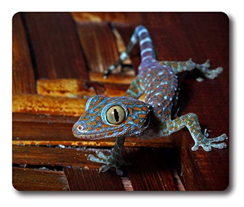 Drempad Gaming Mauspads Custom, Blue Oranged Spotted Lizard Reptile Mouse Pad Rectangle Mouse Pad Gaming Mouse mat -