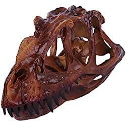 Escala 1/10 De Colección Modelo De Cráneo Fósil De Dinosaurio De Resina Marrón Ceratosaurus