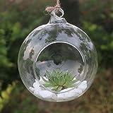 kicode claro bola de cristal para colgar jarrón botella recipiente...