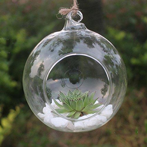 Rosepoem Terrarium Pflanzen Hängen Glas Klar Runde Form Pflanze Aufhänger Air Plant Halter Container Terrarien Aus Glas Für Blumen Pflanzen Hausgarten Wand-dekor 10 cm - Mundgeblasenes Glas Basen