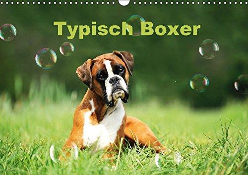 Typisch Boxer (Wandkalender 2018 DIN A3 quer): Mit lustigen Boxern durch das Jahr (Monatskalender, 14 Seiten ) (CALVENDO Tiere)