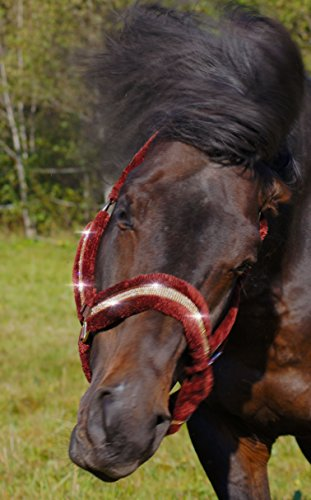 Rittmeister Comfort Halfter Nobility, Transport-Halfter, Stall-Halfter, Pferde-Halfter Cob, Full, Pony (Full, Brown)