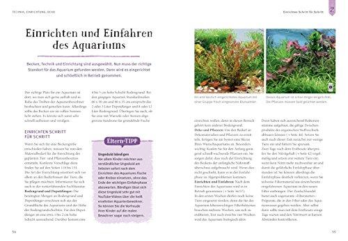 Faszinierendes Aquarium: So fühlen sich die Fische wohl. Mit Eltern-Tipps (GU Mein Heimtier neu) -