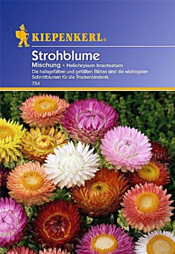 Kiepenkerl Strohblumen-Mischung