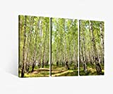 Leinwandbild 3 tlg Birkenwald Birke Wald Baum Landschaft Bäume Weg Bild Bilder Leinwand Leinwandbilder Holz Wandbild mehrteilig 9W038, 3 tlg BxH:90x60cm (3Stk 30x 60cm)
