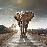 Wallario AluDibond, Bild auf Aluminium, Elefant bei Sonnenaufgang in Afrika- 50 x 50 cm in Premium-Qualität: gebürstete Oberfläche, freischwebende Optik