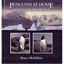 Penguins at Home: Gentoos of Antarctica by Bruce McMillan (1993-09-27)